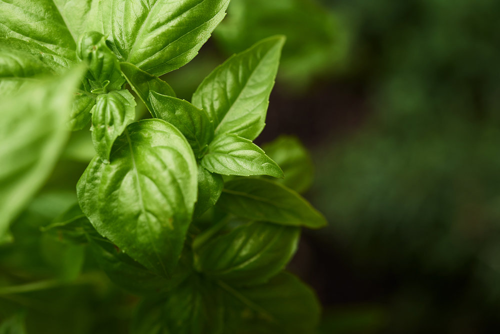 bella-italia-orlando-new-restaurant-photography-food-garden-basil
