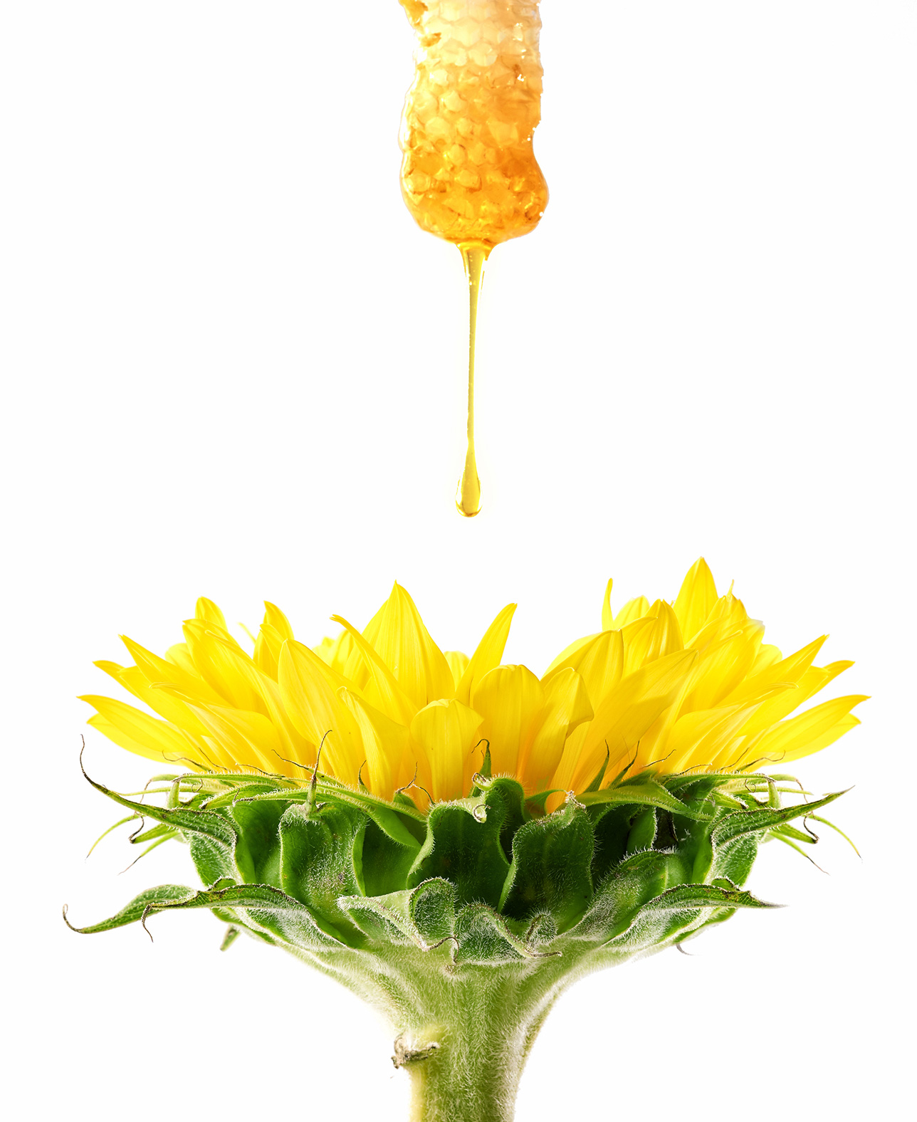food-photography-concept-honey-sunflower